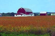 buildings-and-soybeans-1-420x280-03-26